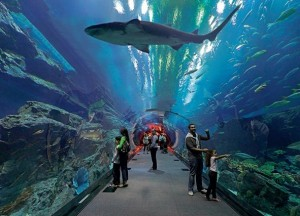 Аквариум огромнейших размеров с туннелем для посетителей внутри, вмещает около 10 миллионов литров воды и более 33 тысяч морских животных. Аквариум является уникальным еще и потому, что животными можно не только любоваться или фотографировать, но и поплавать вместе с акулами.